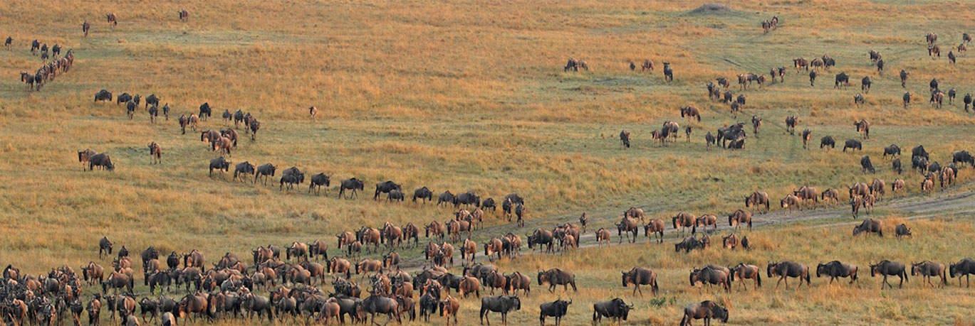 Migration of Animals