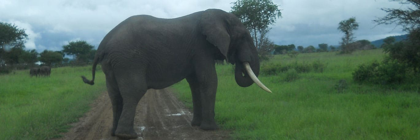 Elephant in Ngorongoro National Park