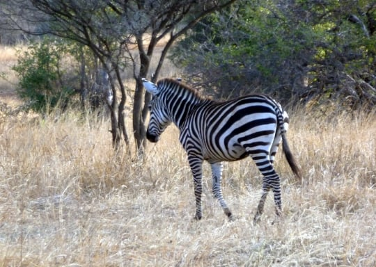 kanuth adventure safaris